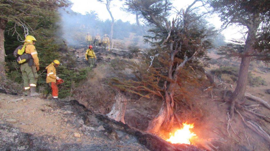 El fuego afecta bosque y arbustos. Imagen ilustrativa.