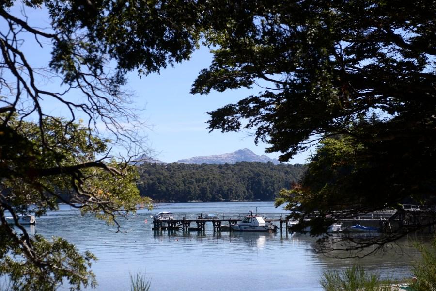 Bosques nativos: Neuquén sumó 50 hectáreas al área de protección - Diario Río Negro