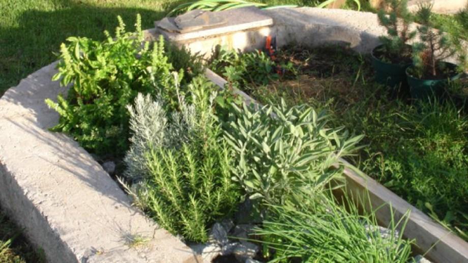 Tres centros de salud de Bariloche ya tienen sus propias huertas con hierbas con fines medicinales. (Archivo)
