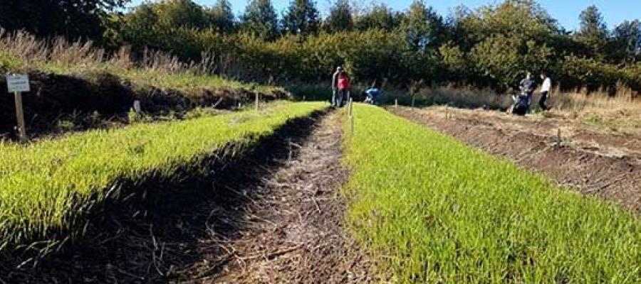Destinada a productores y público en general, la actividad hará énfasis en la autoproducción de semillas.