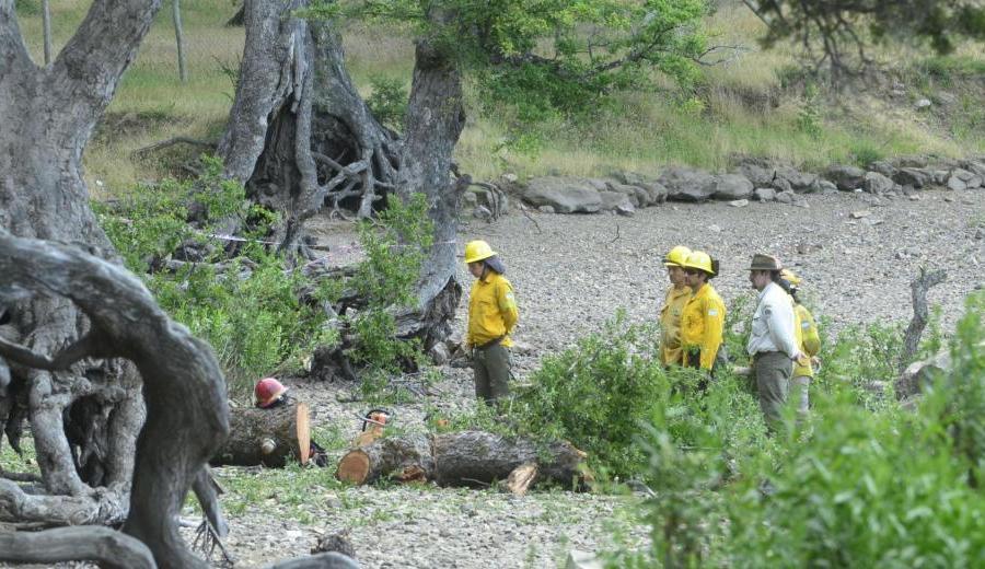Dos niños fallecieron aplastados por un árbol en el camping de Lolen, en San Martín de los Andes. (Patricio Rodríguez).-