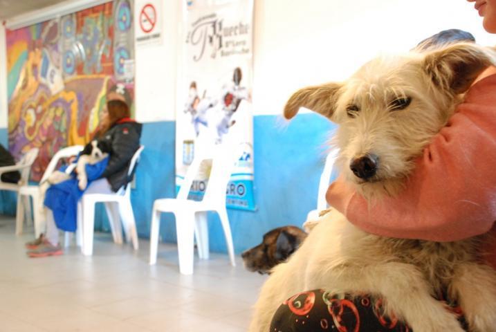 El objetivo de enseñar derecho animal es sensibilizar en la temática desde la primera infancia. (Archivo).-