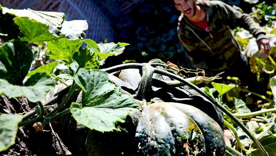Julio Herrera muestra orgulloso el zapallo que cultivó en un árbol. (Foto: Mauro Pérez)