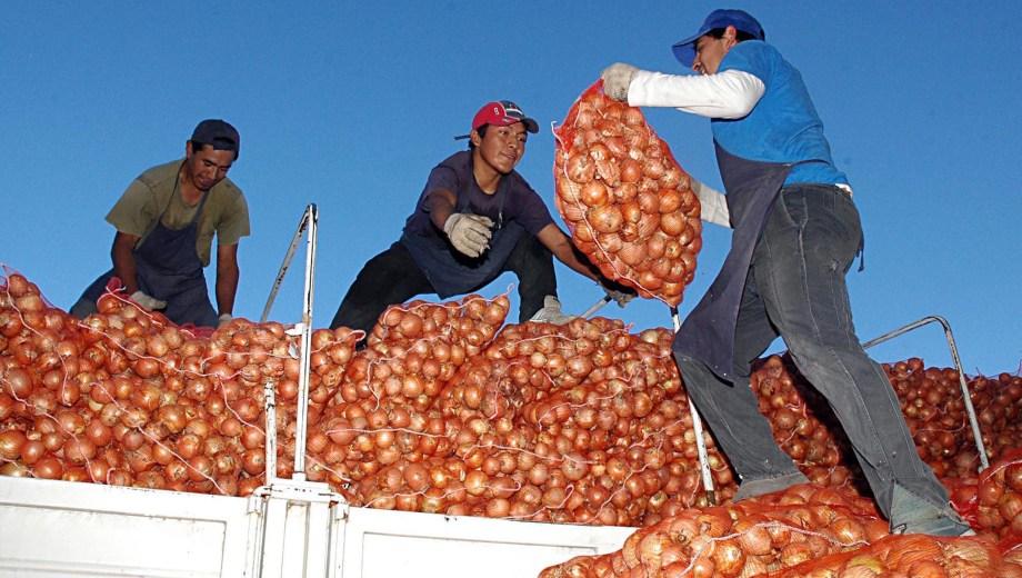 Exportan cebolla del IDEVI a Brasi. Foto: Marcelo Ochoa