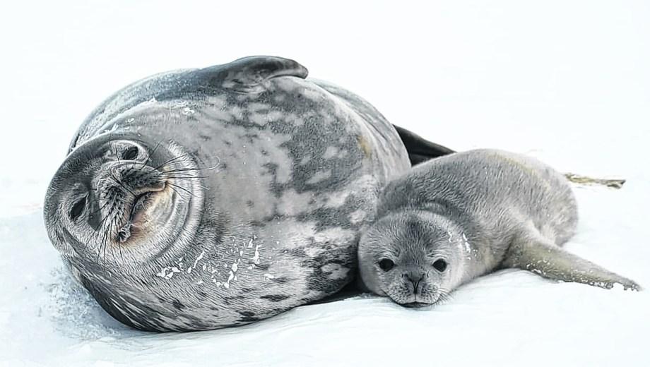 Las focas que fueron su objeto de estudio, y hoy forman parte de su álbum de fotos. Foto: gentileza