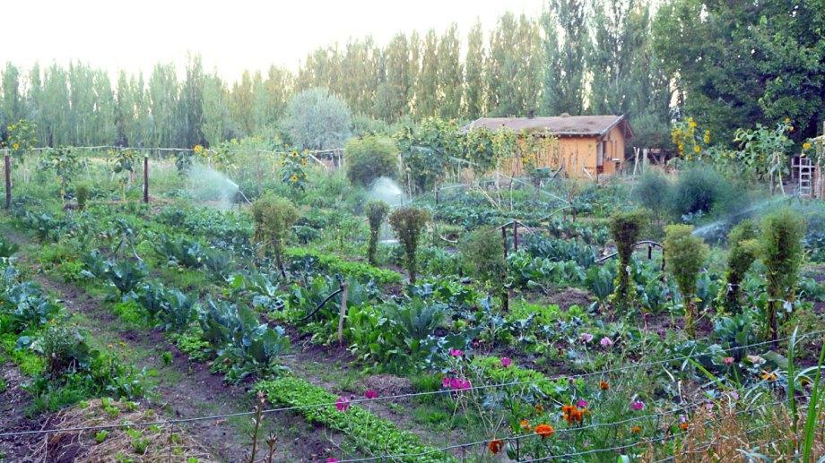 Argentina hoy cuenta con más 3,6 millones de hectáreas dedicadas a la producción orgánica