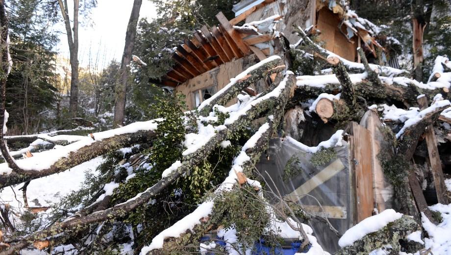 El coihue de unos 50 metros de altura cayó el sábado y destrozó una vivienda en el barrio Italo. (Foto: Alfredo Leiva)