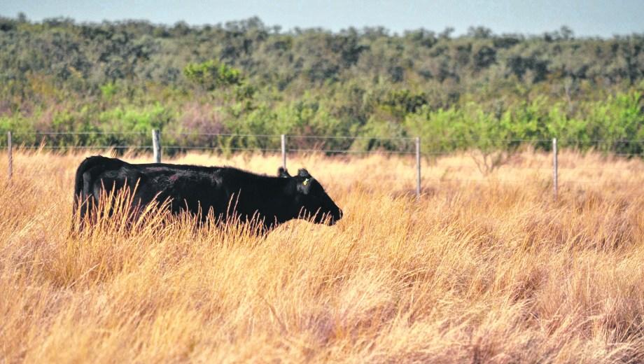 Los bajos stock con los que cuenta la provincia de Río Negro, una de las limitantes para poder exportar en grandes escalas.