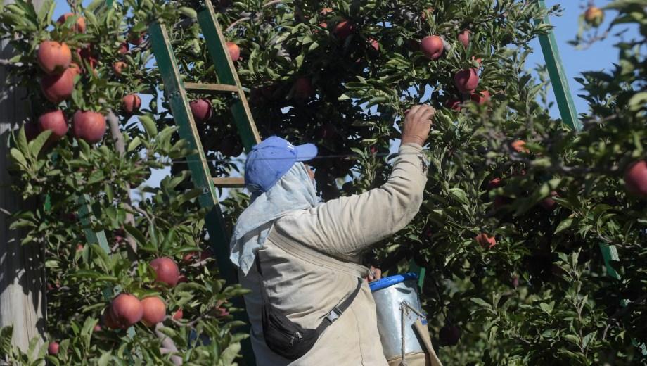 """La Ley 3.611 estableció en 2002 un """"régimen para la vinculación entre la producción, empaque, industria y comercialización de frutas""""."""