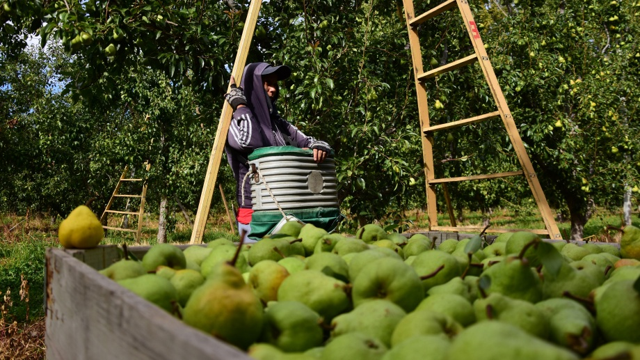 Alivio para los exportadores. Esta mejora debería derramar al valor de la fruta de los productores primarios.
