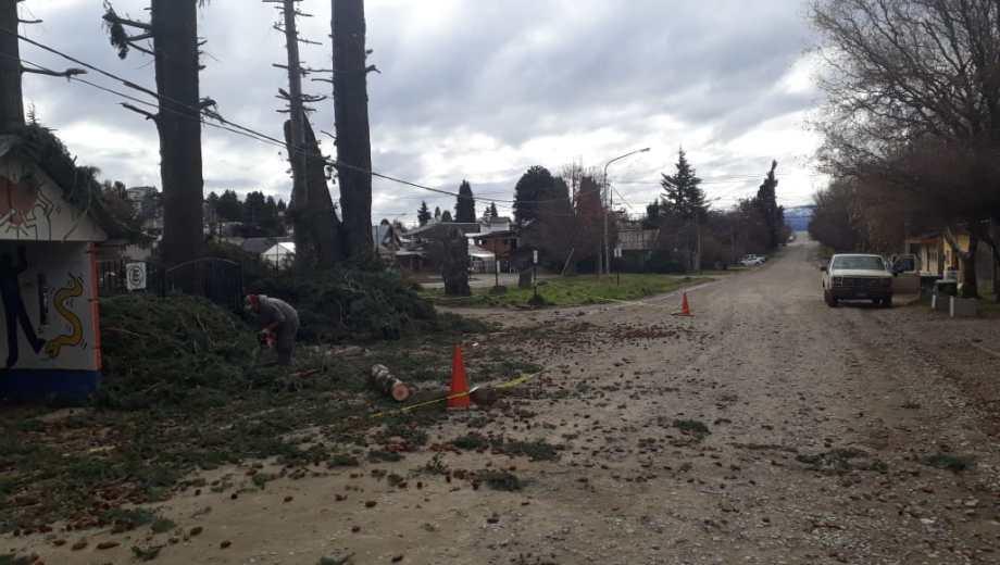 Una poda en la escuela 187 dejó sin luz al barrio El Mallín, en Bariloche. (Gentileza)