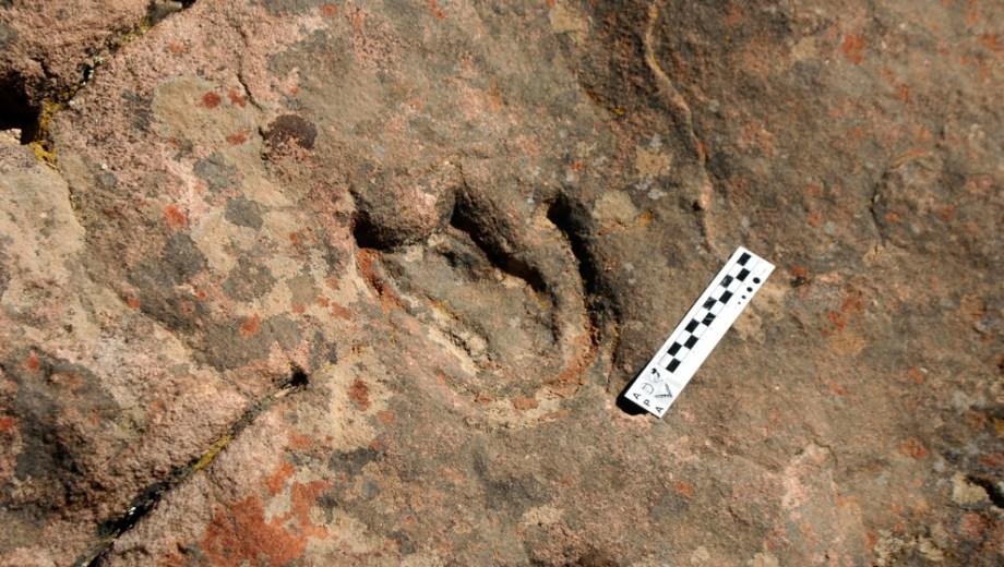 El dino es de origen boreal y se estima que llegó al sur en el Cretácico.