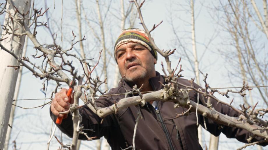La poda de los frutales requiere sapiencia y práctica. Foto César Izza