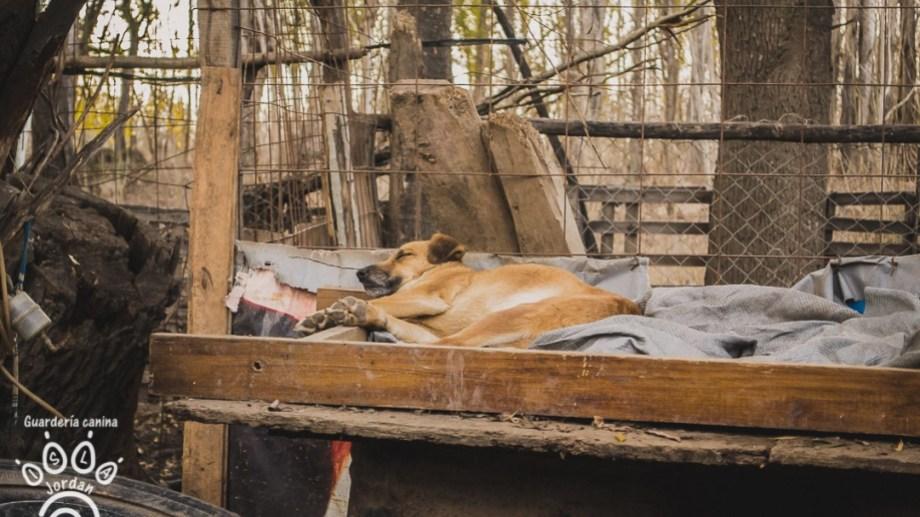 Las voluntarias de la Guardería Canina de la Isla Jordán reclaman al municipio que cumpla con sus promesas. (Foto: Gentileza)
