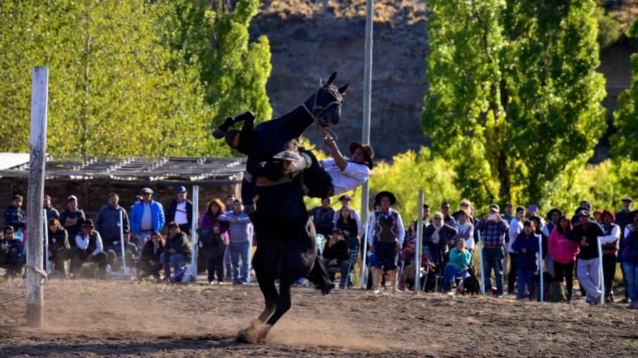El uso de los caballos en jineteadas está bajo la lupa. Foto: Alfredo Leiva