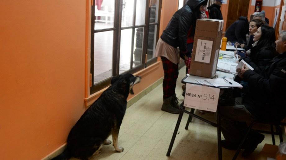 En las elecciones municipales de Bariloche hay 41 escuelas con mesas habilitadas. Archivo