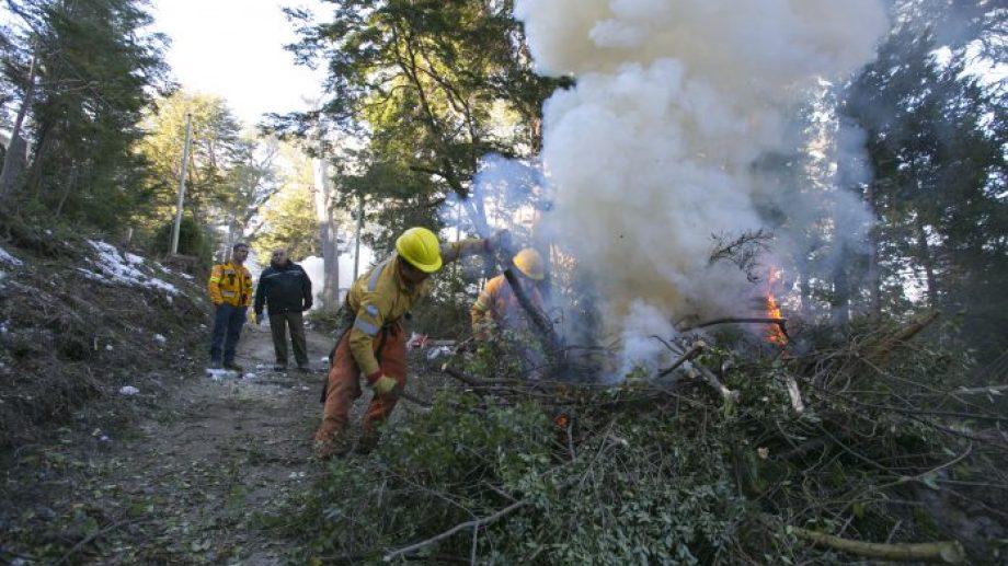En Villa la Angostura retiran árboles y ramas que podrían afectar el cableado eléctrico. (Gentileza).-