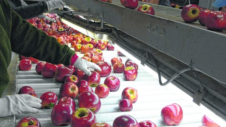 El holding está interesado en comprar peras y manzanas.