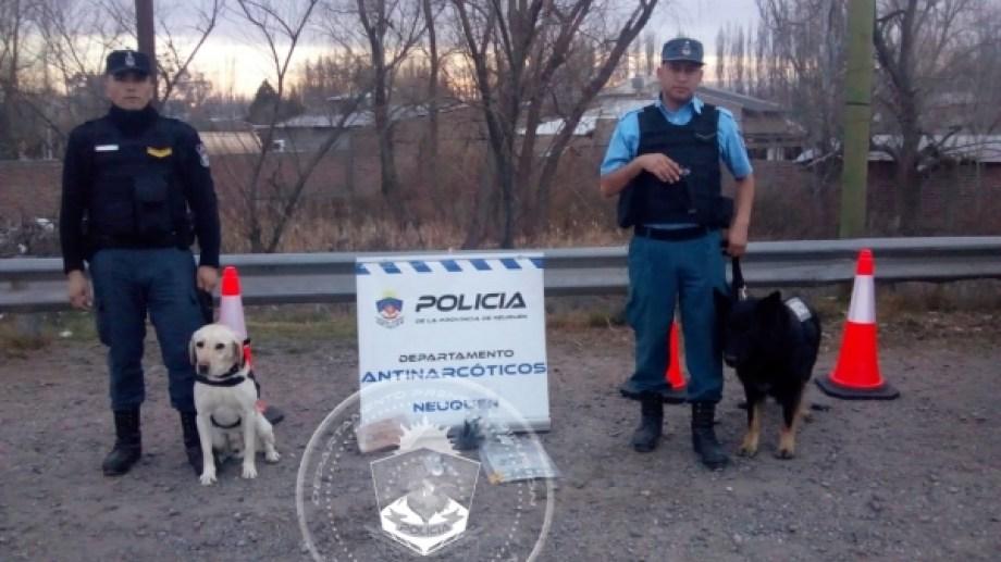 Los efectivos reforzaron la inspección tras la advertencia de los perros (Foto: Gentileza)