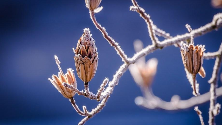 Pronóstico: el tiempo sigue bueno pero frío
