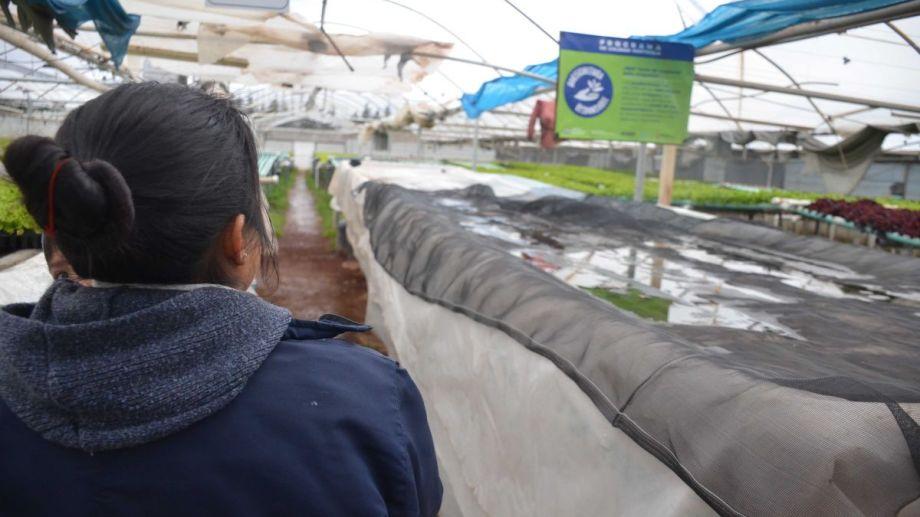 El invernadero donde producen con el sistema de hidroponía acumuló una fuerte deuda por el aumento desmedido de la energía. (Foto: Yamil Regules)