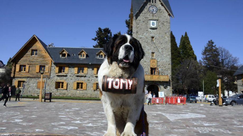 Las fotografías con los perros San bernardo son un clásico en el Centro Cívico de Bariloche. Foto: Archivo