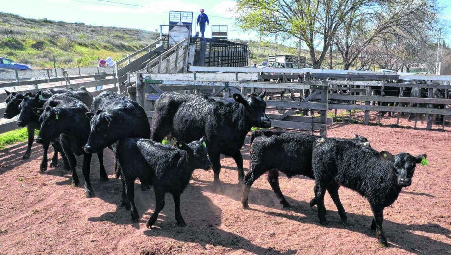 La ganadería  se hace un lugar entre las principales actividades económicas de la provincia.