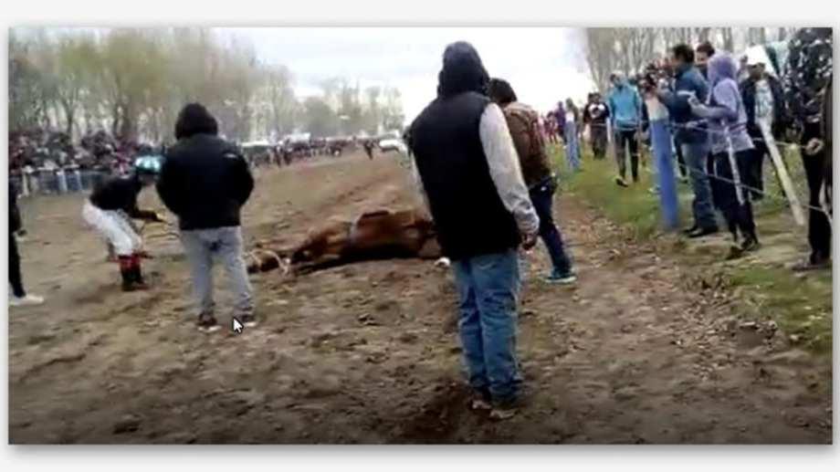 El dueño del animal es oriundo de Neuquén (Foto: Gentileza)