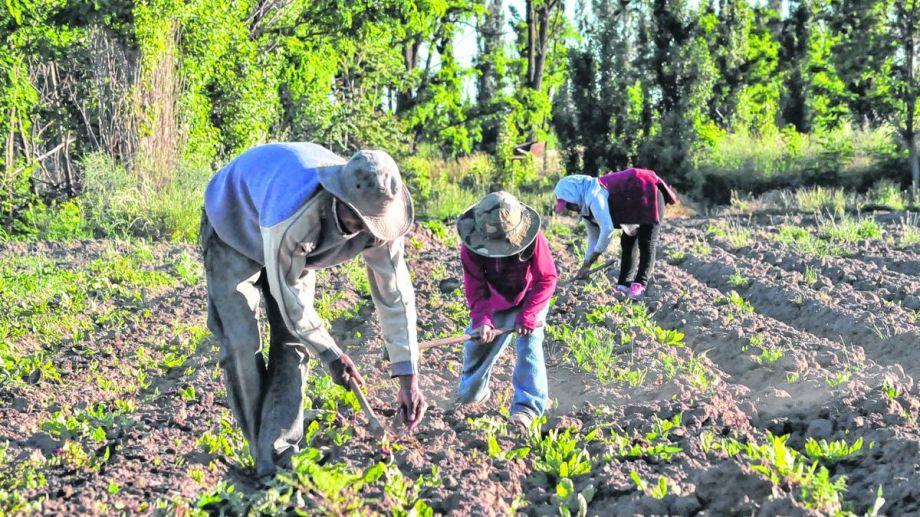 Unas 150 familias de origen boliviano producen hortalizas en Río Colorado y venden en ferias y comercios. (Foto: Jorge Tanos)