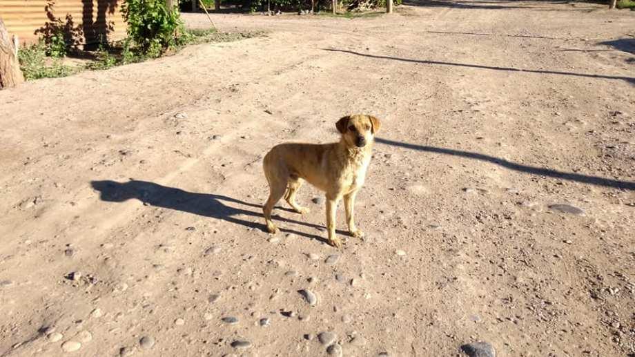 Cerca de 200 perros viven en la  toma 10 de Febrero. Foto: gentileza.