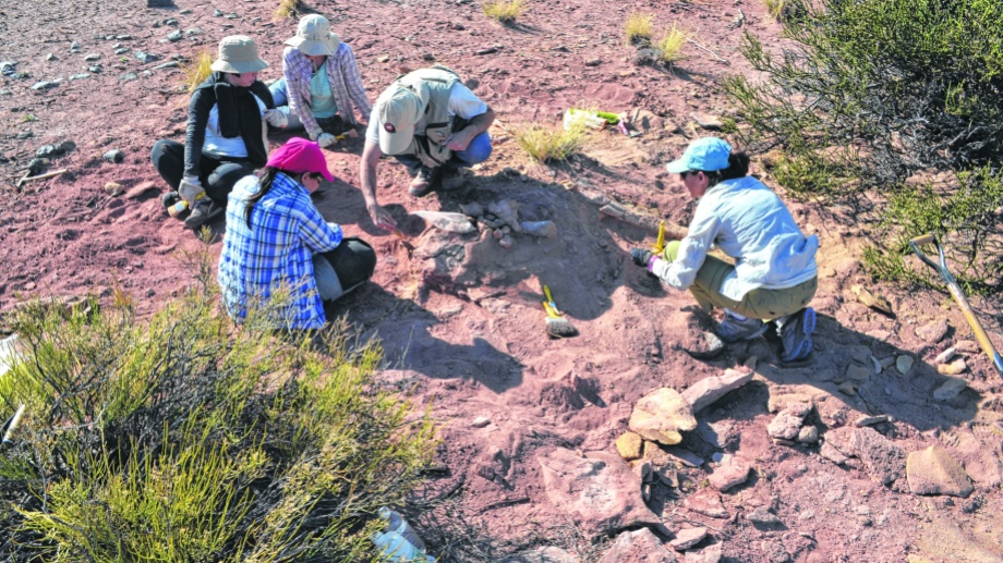 Los científicos retiraron parte de los restos del dino hallado en Rincón de los Sauces.
