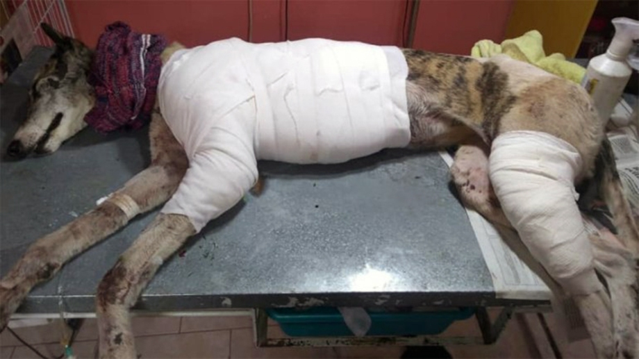 """Formularon cargos contra el acusado de arrastrar a la perra """"Estelita"""" sobre el asfalto de la Ruta 65. Foto: Gentileza APAFO"""