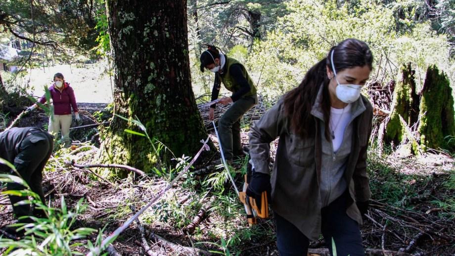 La semana pasada voluntarios fueron a Puerto Blest para iniciar tareas para erradicar la hiedra invasora. Foto: Gentileza UNC