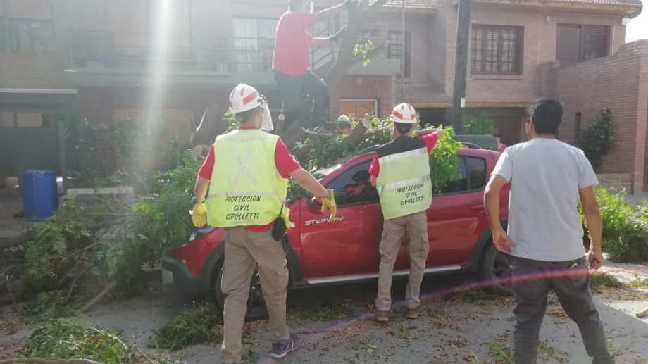 El viento provocó la caída de un árbol, que causó graves daños a un vehículo. Foto: Agencia Cipolletti.