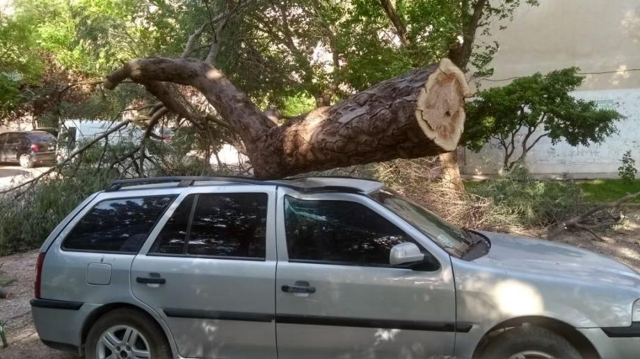El árbol cayó sobre un WV Country. Foto: Gentileza
