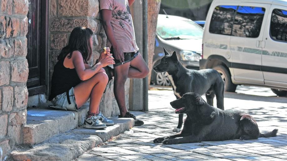 Perros callejeros, un problema que se repite en Roca. (Foto: Gonzalo Maldonado)