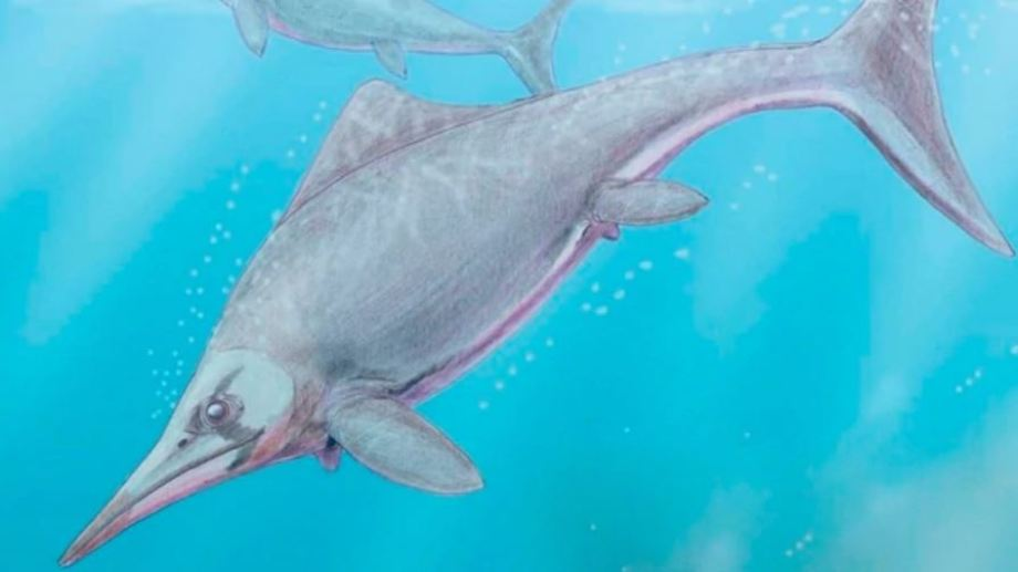 Ilustración de un ictiosaurio. Autor Dmitry Bogdanov. Foto: gentileza