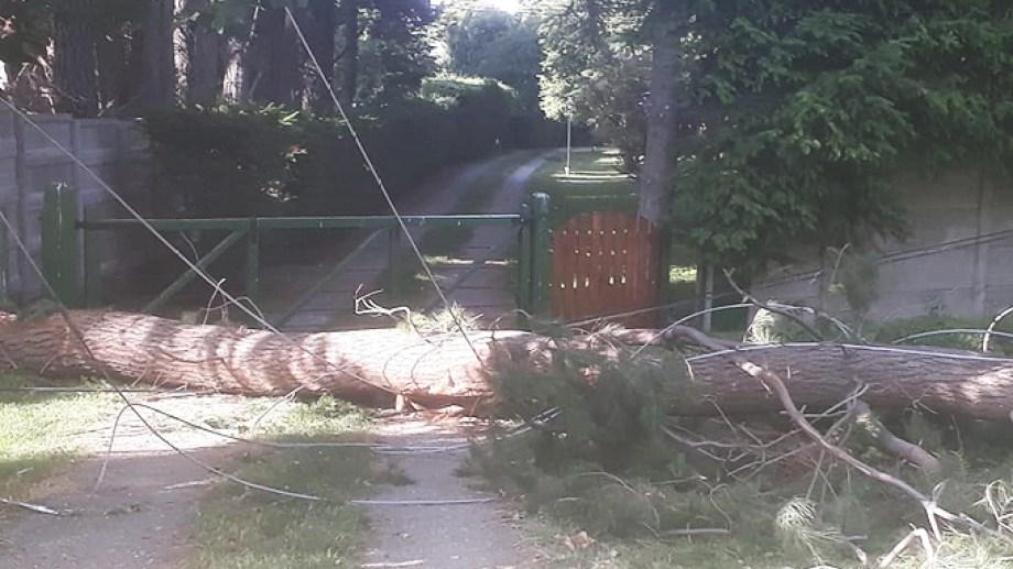 Uno de los árboles caídos con el temporal de viento. Foto Gentileza CEB