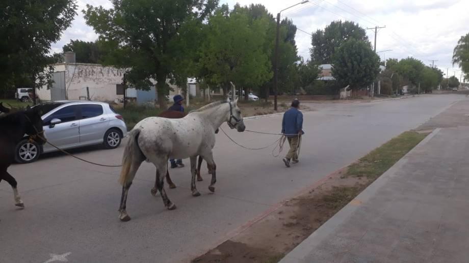 El dueño deberá pagar una multa para retirarlos del corral municipal. Foto Municipalidad de Senillosa