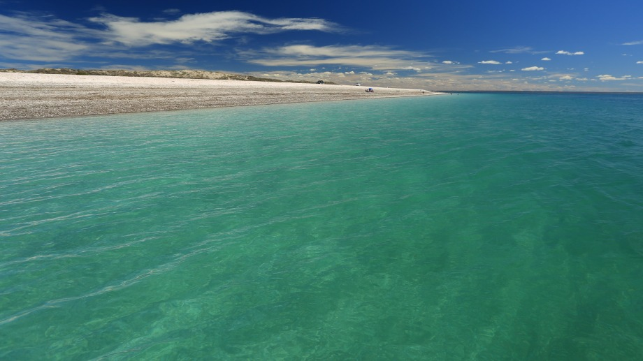 Las conchillas recubren la arena, y forman delicados médanos. Fotos: Martín Brunella