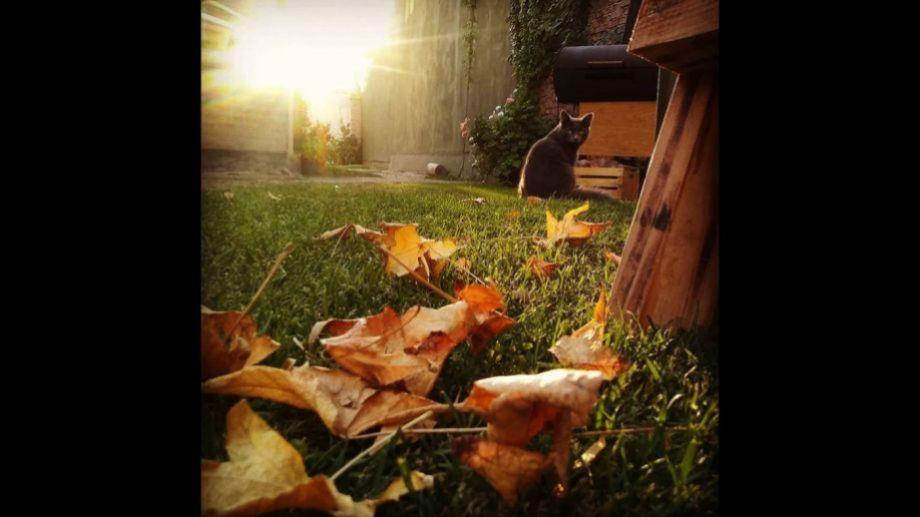 Marisa Beretta: Disfrutando el otoño, en el patio de casa, con el gato Chuchu.