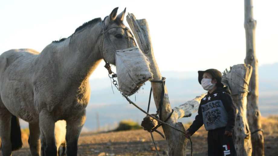 """""""Mira tío... ¡usa barbijo como yo!"""" dijo sorprendido Joaquín al ver al caballo con el morral en el norte neuquino. Foto: Martín Muñoz."""