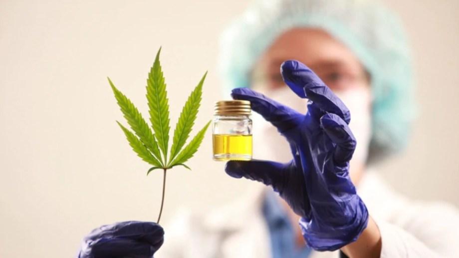 conferencia-sobre-el-cannabis-medicinal-durante-el-aislamiento
