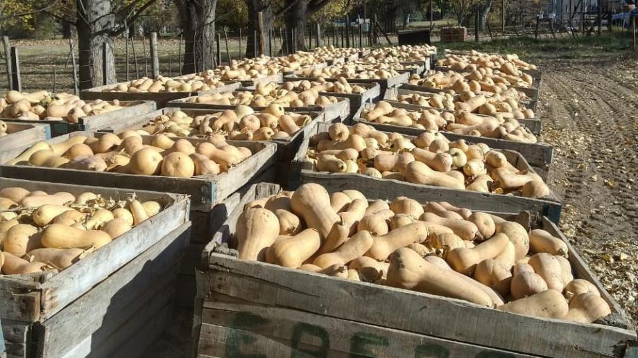 Se llenaron 50 bins producto de la cosecha que se hizo en el predio. Foto: gentileza.