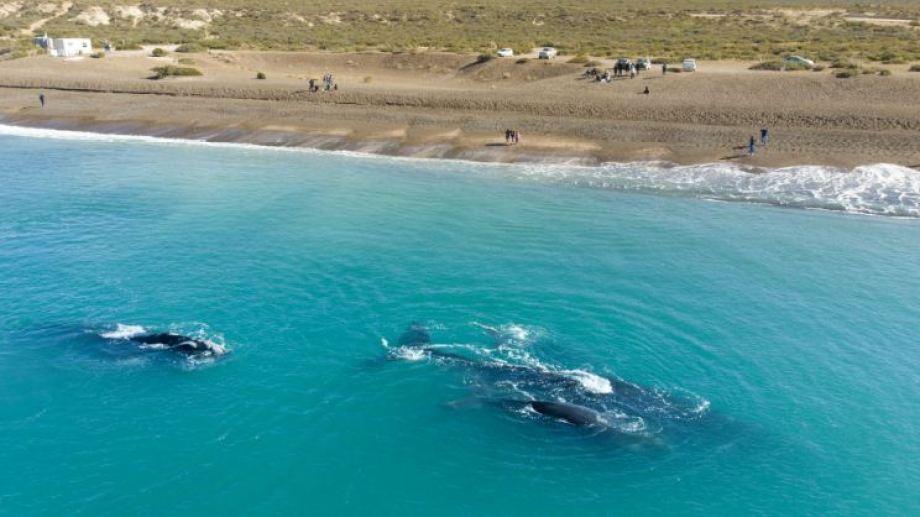 Puerto Madryn ofrece comprar ahora con descuento y viajar hasta junio del  2021