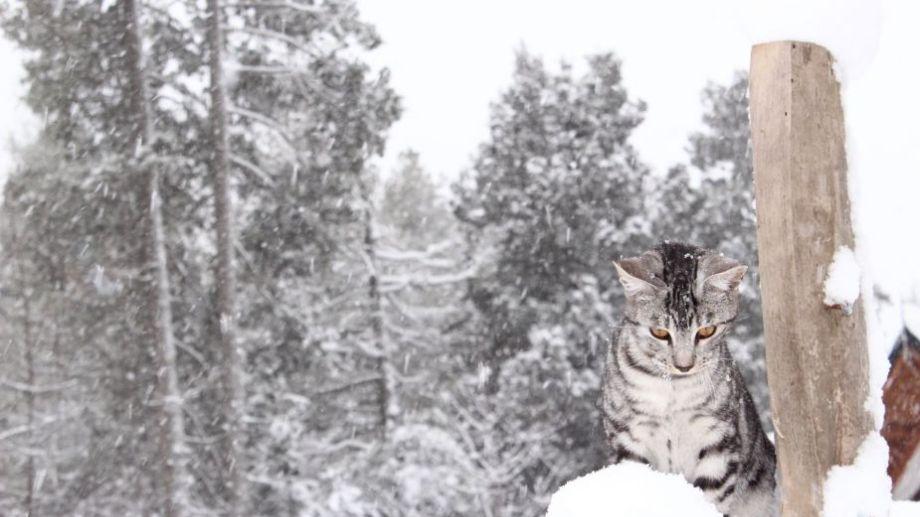 La imagen de la gata Sasha la aportó el lector Rubén Lagras, desde Bariloche. ¡Podés sumar la tuya a través de las redes sociales!.-
