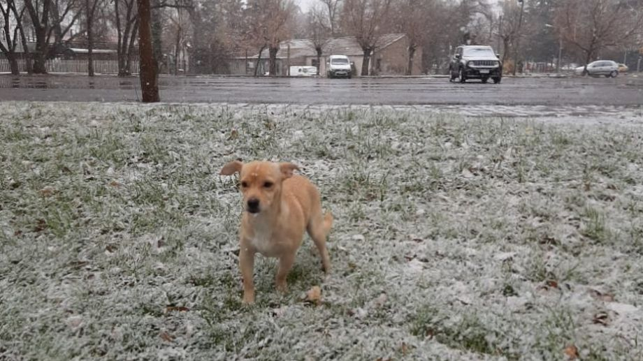 Vitto también se entretuvo en la nieve este fin de semana, en Neuquén. ¡Podés sumar la foto de tu mascota a través de las redes sociales!.-