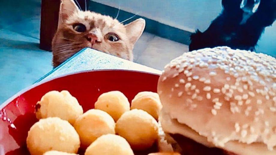 El invierno da más ganas de comer, según Chili (el gato) y Drama (la perra) desde Plottier. ¡Podés sumar la foto de tu mascota a través de las redes sociales!.-