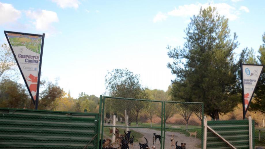Reacondicionarán la guardería canina en Cipolletti. (Foto archivo)