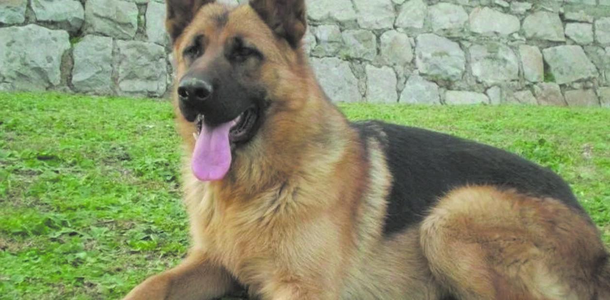 Hoy se conmemora el Día Nacional del perro